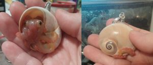Another Octopus hiding in a shell charm by ShadyDarkGirl