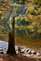 Chapel pond reflection by funygirl38