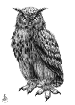 Owl [Black and white] by NiceShadow
