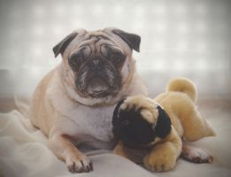 Pug Luv by Catandhearts