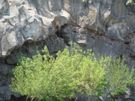 Lushery Green and Rocks by silver6162