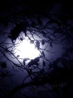 Throughout the Moon by Andenne