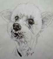 My Dog Cosmo by JazIllustrations