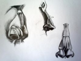 sketches: nose by Infinitely