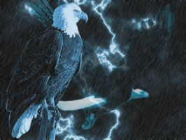 EAGLES IN THE RAIN by storm347