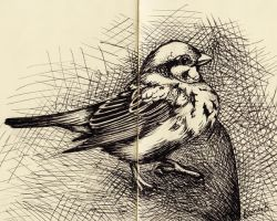 Little Sparrow by keinneb