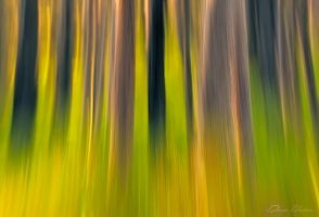 Brush Stroked Forest by DrewHopper