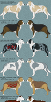 Border Collie Adoptables - AVAILABLE by sazzy-riza