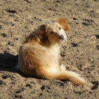 dog lying in the sand by Nexu4