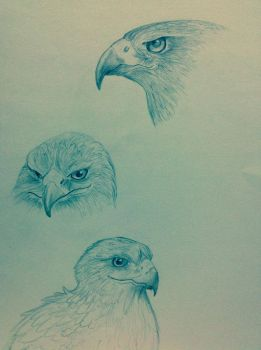 Falcon Sketches by BlueEyes567
