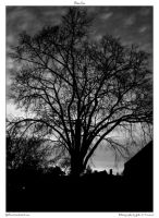 Tree bw by yellowcaseartist