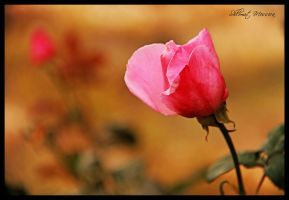 For my friends by ShlomitMessica