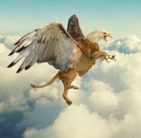Gryphon above the clouds by stillarebel