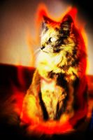 Burning Cat by XResch