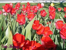 Tulips Forever Red by ChickensAndDucks