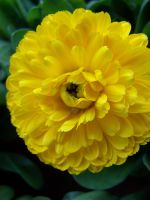 Big Yellow by theNanna