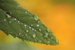 Raindrops by photosbecca