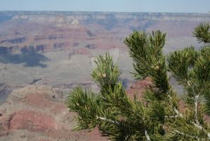 Tree at the Grand Canyon by Lefty-Robear
