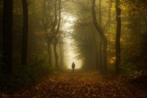 Closer by Oer-Wout