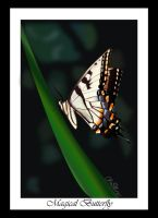Magical Butterfly by christinee