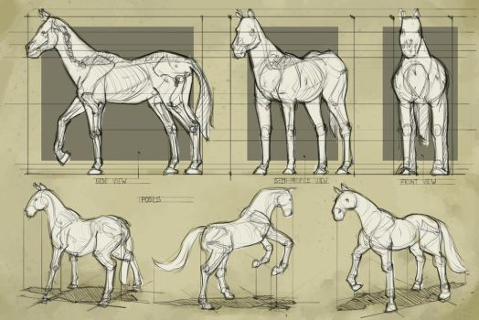 Study - Horse 3 by georgecatalin93