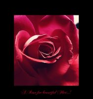 A Rose for beautiful Flori by Nataly1st