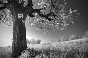 IR Tree by mr-kreciu