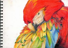parrot by blada-blada