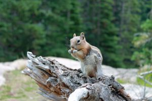 Ground Squirrel by FranklymyDeer