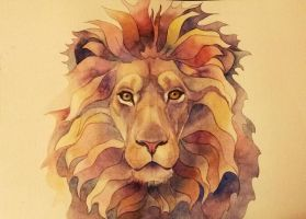 lion coloured by TanyG