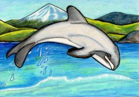 Hector's Dolphin by lemurkat