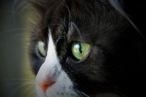 Cat by TA1AT