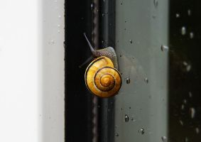 Another Snail by AngeLAlpha
