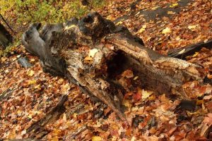 log rot by Canada-Guy-Eh