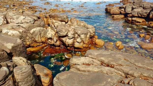 Tide Pool 5 by CompassLogicStock