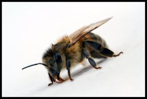 bee3 by 21711