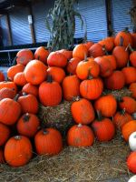 Pumpkins stock by thiselectricheart