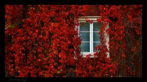 Red Wall by tauzero