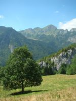 The tree and the mountain by Gragalit