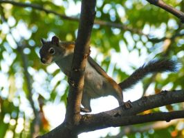 Squirrel Ninja to the rescue by MichelLalonde