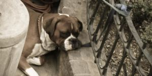 A dogs Life by gungrave2002