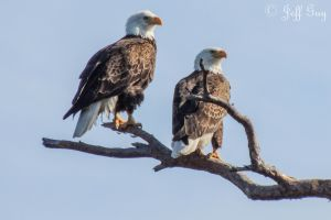 Proud Parents by jguy1964