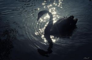 Black swan song by missfortune11