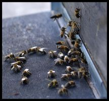 An Armee of Bees by FrankAndCarySTOCK