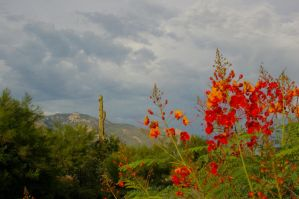 Catalinas and Bird of Paradise by PatGoltz