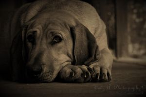 When things get ruff by Nikonfinest