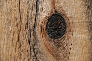 wood tex by HoldFastStock
