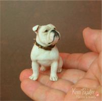 Miniature Bulldog sculpture with spiked collar by Pajutee