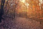 Into the Fall by WisteriaPhotography