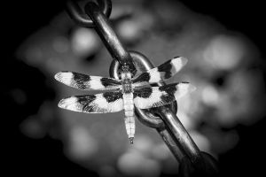 DragonFly and Chain by pfister